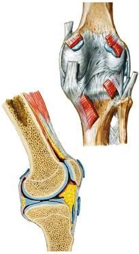 магнитно-резонансная томография коленный сустав