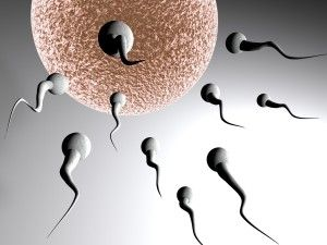 многофункциональный контрацептив