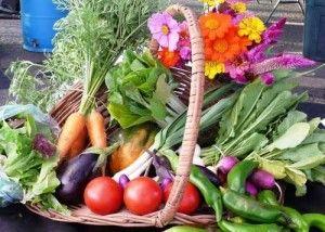 продукты для молочной железы